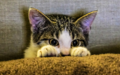 7 Puntos clave para proteger a tu gato del frío