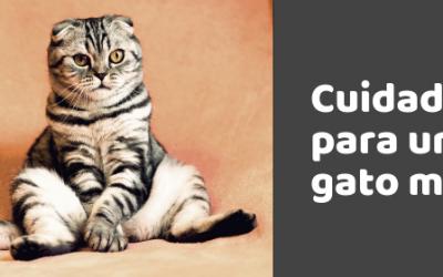 Cuidados específicos para un gato mayor