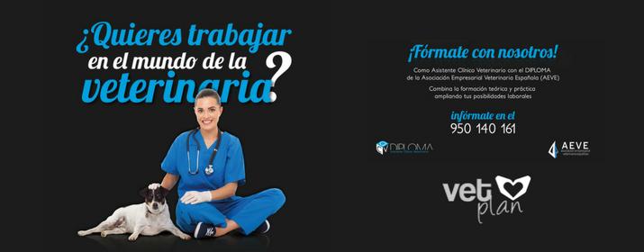 ¿Te gustaría formarte auxiliar veterinario? ¡Te contamos cómo!