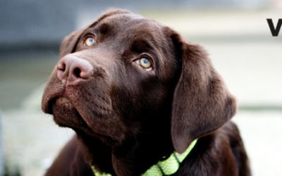 Enfermedad digestiva en perros: síntomas y causas