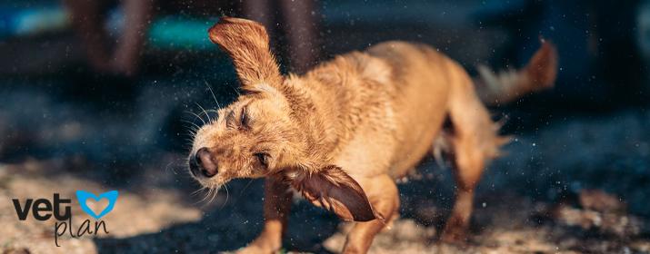 9 consejos para ayudar a tu perro a sobrellevar mejor el calor del verano