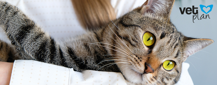 Enfermedades oculares más comunes en gatos