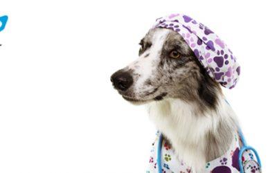 Esterilización preventiva: descubre sus beneficios para tu mascota