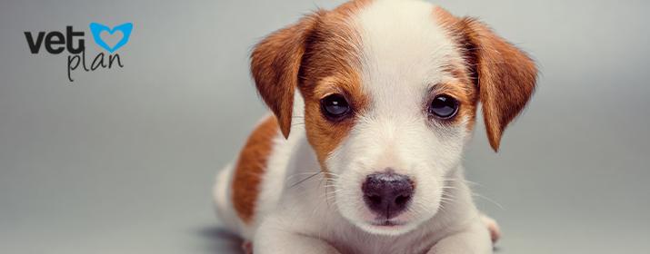 Cómo enseñar a tu perro cachorro a no morder