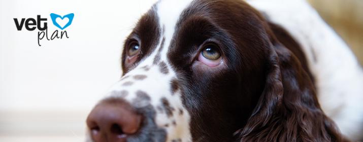 Por qué llora mi perro y qué puedo hacer para ayudarlo