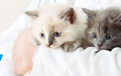 Medicina preventiva: factor clave para el bienestar de tu mascota